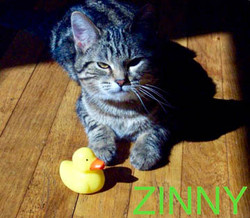 Zinny