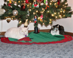 Sweetie & Tipper waiting for Santa