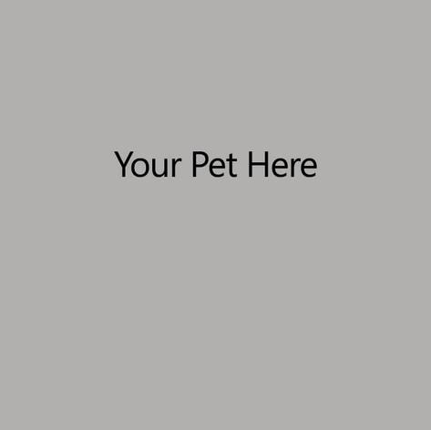 Your Pet Here.jpg