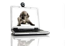 Pet on screen-grief.jpg