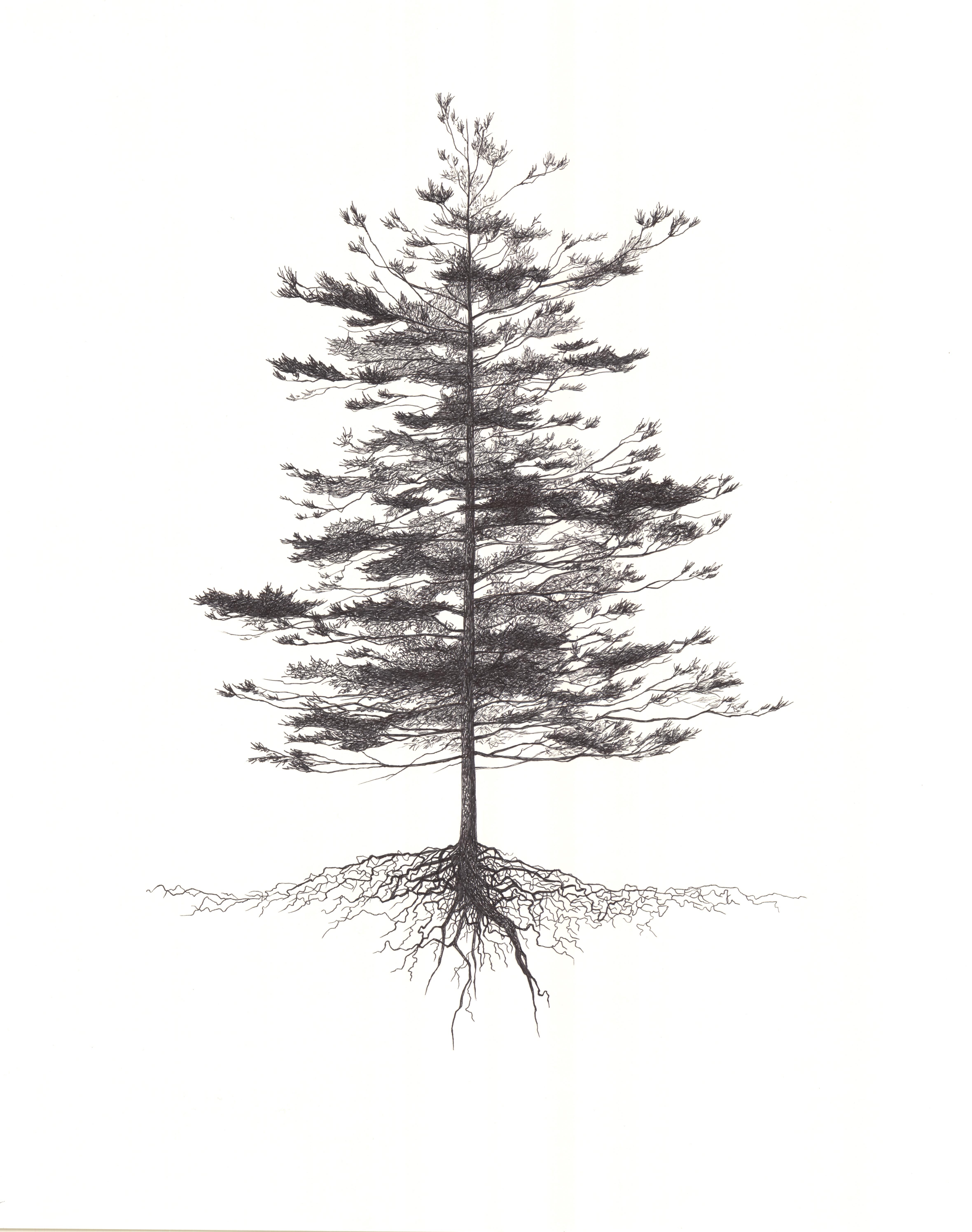 """White Pine"""