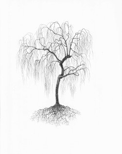"""Weeping Willow"""