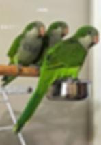 Green Babies