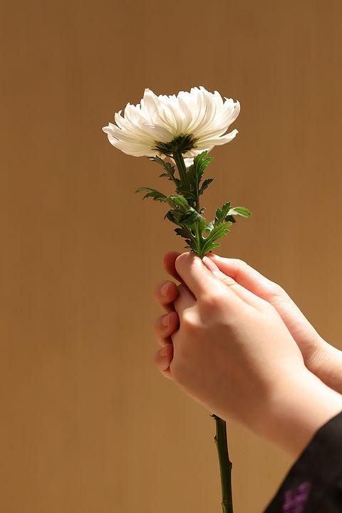 chrysanthemum-5273366_1920.jpg
