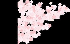 musubi 桜.png