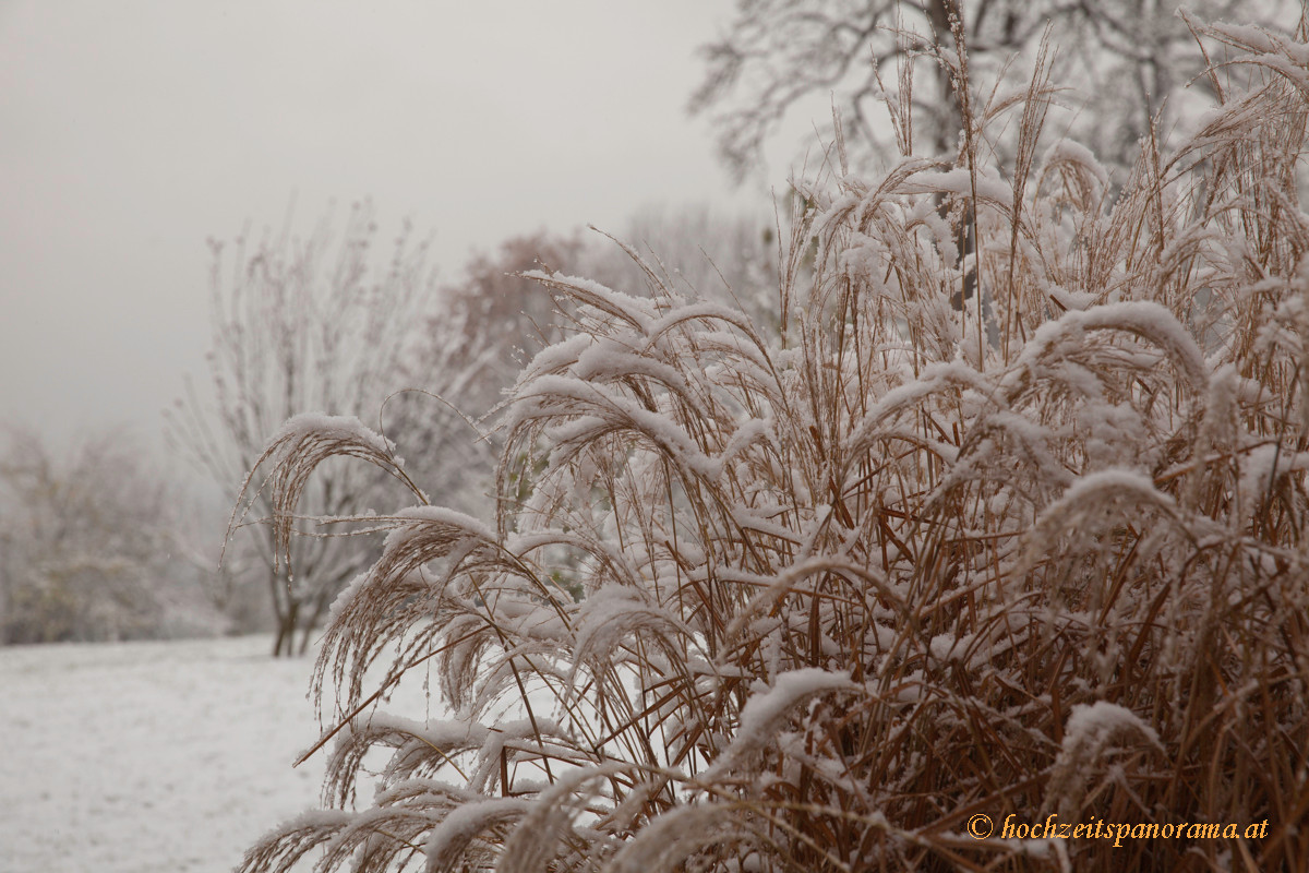 _MG_8897 erster Schnee.jpg