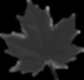 Maple_Leaf_Red_PNG_Clip_Art_Image_edited