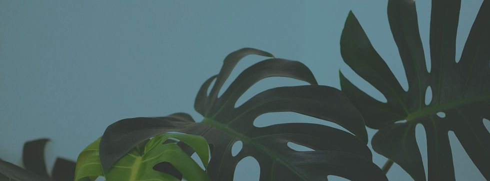 Tropical%2520Leaves_edited_edited.jpg