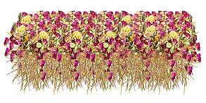 Somme Roses For My Little Mushroom 50 x 100 cm
