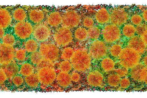 Le jardin des Carthamus 50 x 100cm