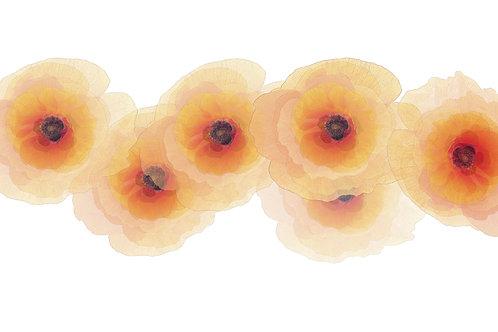 Coquelicots - Fleurs fragiles 50 x 100cm