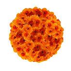 Bouquet aphrodisiaque pour nirvana partagé