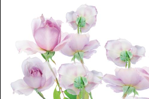 Cartes postales Dancing Flowers Série N° 2