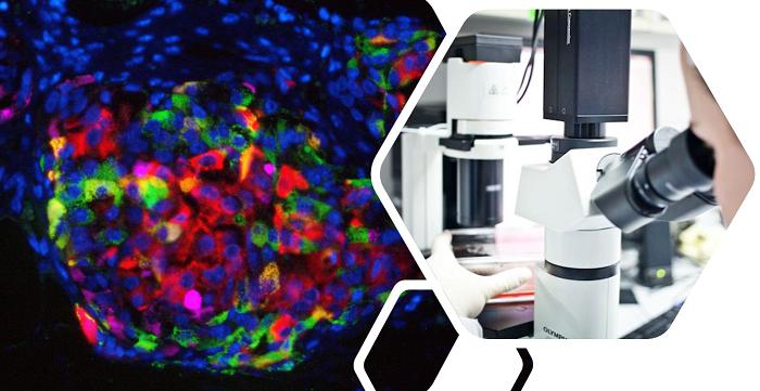 חברת קדימהסטם מודיעה על פרסום מאמר מדעי במגזין Frontiers in Endocrinology