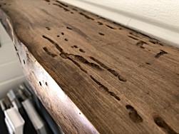 Cool termite pattern close up of bridal shelf.