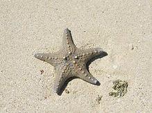 starfish web.jpg