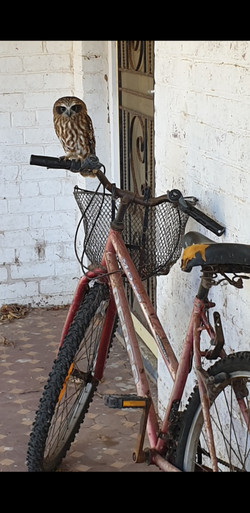50 Joan Goad - Owl on bike