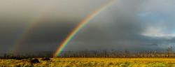 65 Trish Deutscher - Rainbow
