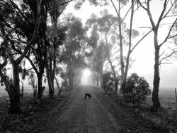 105 Ruth Addlem - Morning Fog with Millie