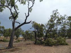 67Jeanie Clarke - NYD storm2021