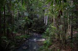 104 Mark Radford - Buderim Forest QLD