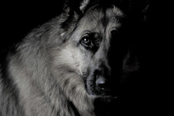 2 Trish Detchser - Dog