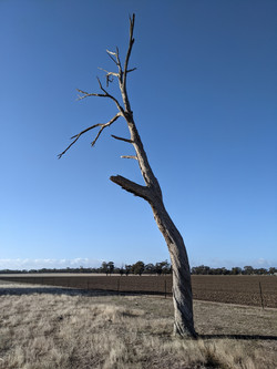51 Helen Hobbs - Dead Tree