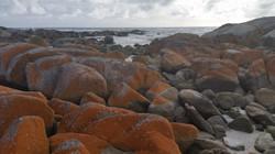 100 Scott Neill - Red Rocks