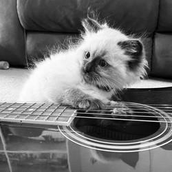 27 Faye Johns - Lockdown Kitty