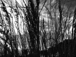 83 Beatrix Schellens (11 Years Old) - Grasses