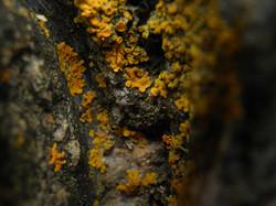 63 Nico YdelReal - Rock with Lichen