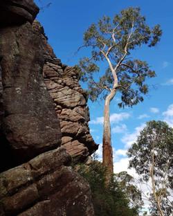 70 Jade Tickner - Tree rock