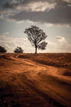 81 Ben Gosling - Tree
