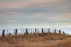 84 Ben Gosling - Fence