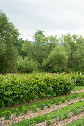 Back to Basics: Plotting Your Garden