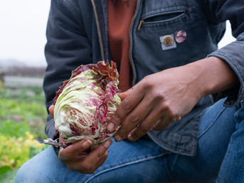 Organizations Working Towards Equality, Opportunity and Land Access in Agriculture