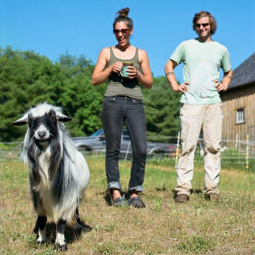 Goat dairy gamble: A cross-country move to Rural Maine with 40 animals along for the ride @coppertailfarm