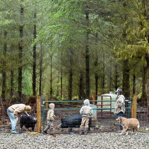 Redfeather Farm: Family leaves Seattle to build a pasture-raised farm in the mountains of Duvall, WA