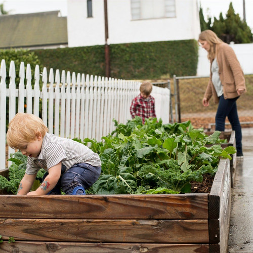 A nurse and a pastor build a minimal urban haven and flower farm on their small San Diego allotment