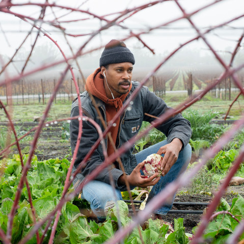 Fine Dining to the Fields: One man's journey from Chez Panisse to farming in the Sonoma Valley