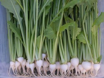 Back to Basics: Preserve the Harvest