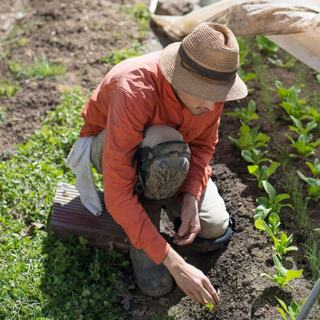 Meet The Culinary Farmer, a former NYC chef turned North Carolina speciality grower