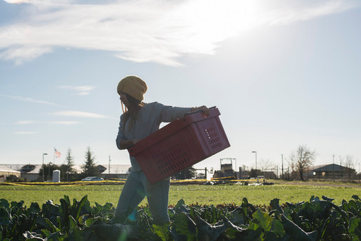 College Farmer Forges New Path in California and Looks to Inspire a Movement of Young Growers