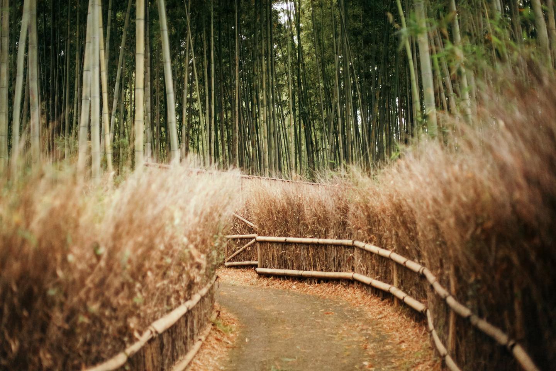Bamboo1.jpg
