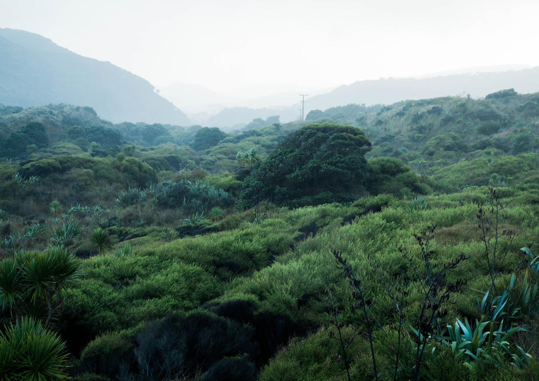 Bethells Valley.jpg