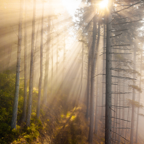 Fog Trees FX.jpg