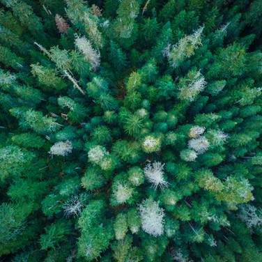 Green Trees-3.JPG