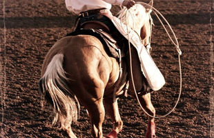 Rope Horse