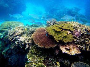 Panama Canal Port Dredging That Damages Coral Reefs Stopped By CIAM´s Legal Action
