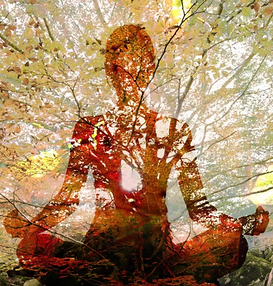 Fall Equinox Embodied Energy Cleanse